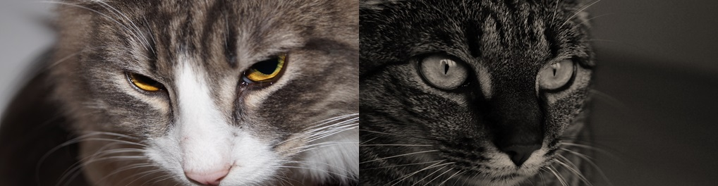 Katten 12