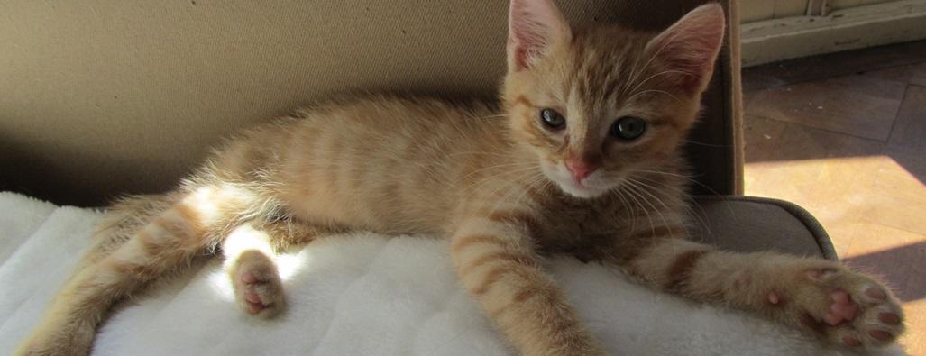 Katten 4