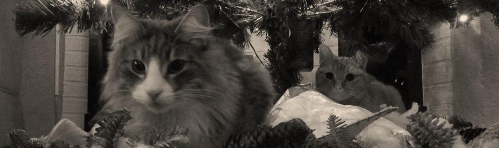 Katten 9