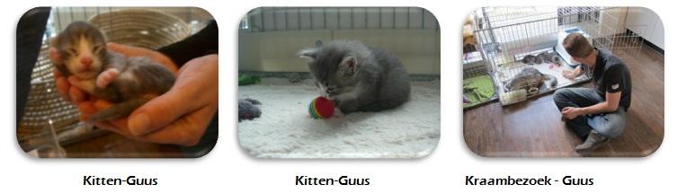 Kitten Guus